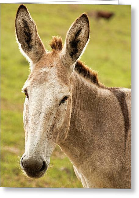 Greeting Card featuring the photograph Donkey Out In Nature by Rob D Imagery