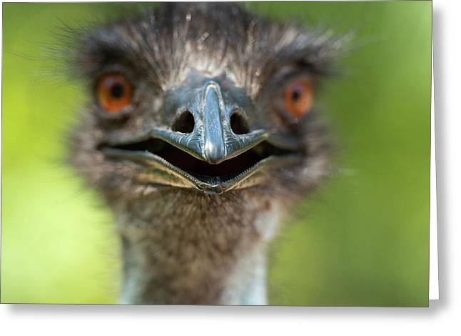 Greeting Card featuring the photograph Australian Emu Outdoors by Rob D Imagery