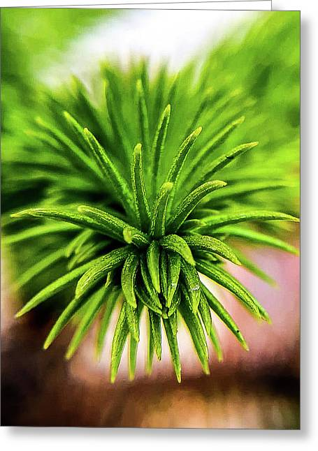 Green Spines Greeting Card