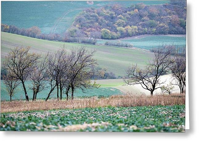 Greeting Card featuring the photograph Autumn In Moravia 8 by Dubi Roman
