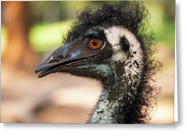 Greeting Card featuring the photograph Emu By Itself Outdoors During The Daytime. by Rob D Imagery
