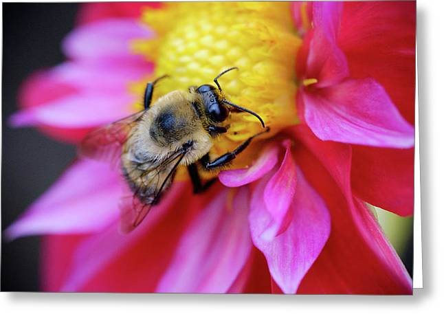 Greeting Card featuring the photograph A Bumblebee On A Flower by Nicole Young