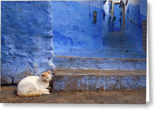 Greeting Card featuring the photograph A Cat In Chefchaouen by Nicole Young