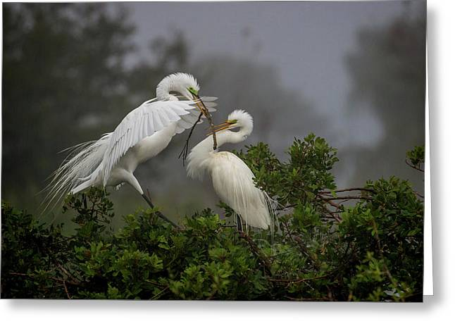 A Couple Of Birds Greeting Card