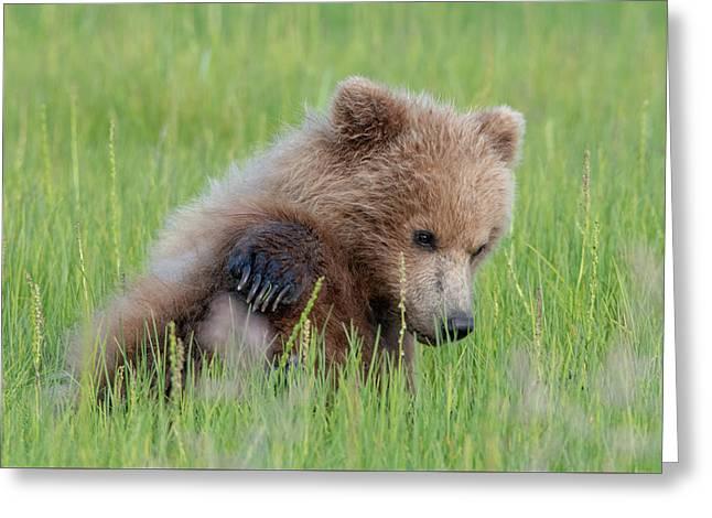 A Coy Cub Greeting Card