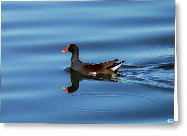A Day For Reflection Greeting Card