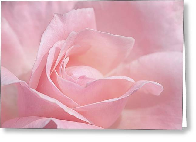 Greeting Card featuring the photograph A Delicate Pink Rose by Susan Rissi Tregoning