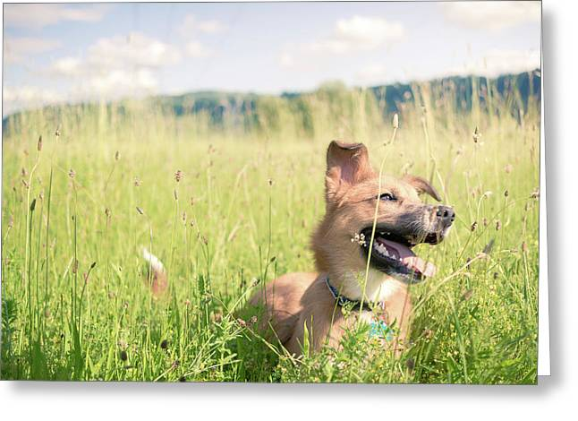 Greeting Card featuring the photograph A Dog In The Park by Nicole Young