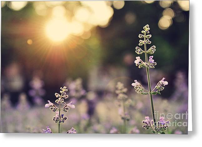 A Field Of Lavender Flowers During Greeting Card