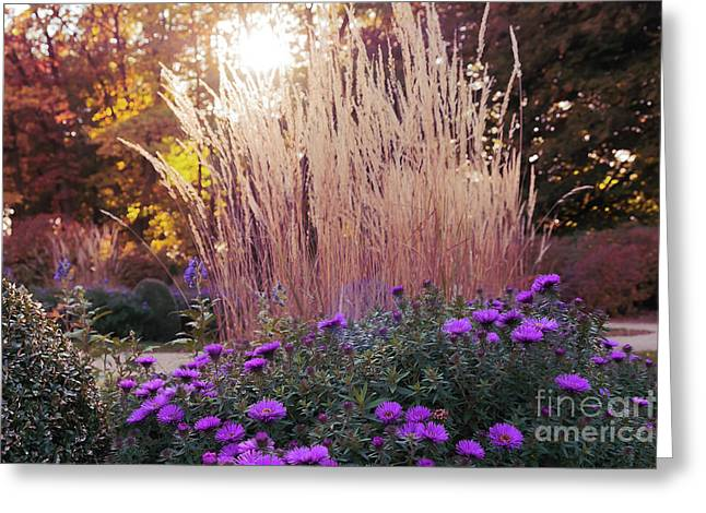 A Flower Bed In The Autumn Park Greeting Card