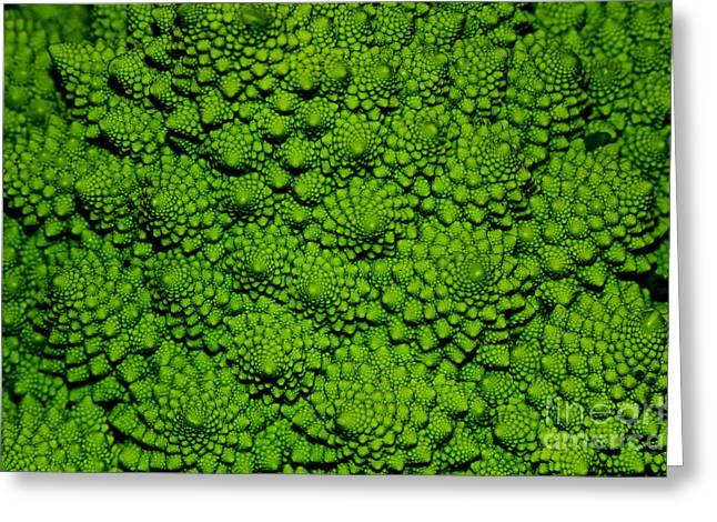 A Green Cabbage Closeup Greeting Card