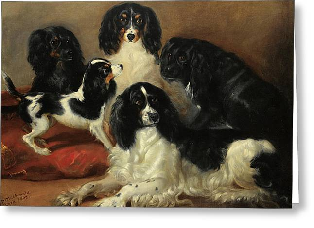A Group Of Spaniels In An Interior Greeting Card