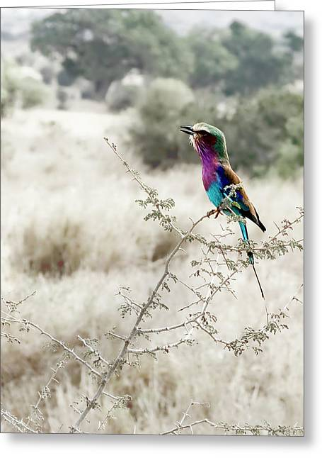A Lilac Breasted Roller Sings, Desaturated Greeting Card