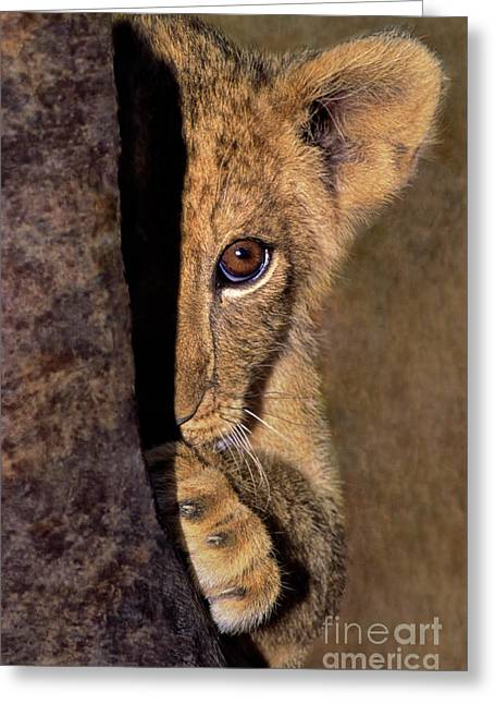 A Lion Cub Plays Hide And Seek Wildlife Rescue Greeting Card