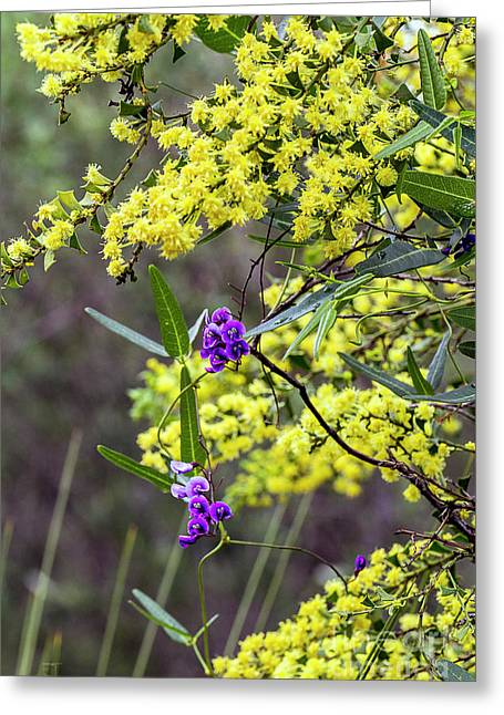 Greeting Card featuring the photograph A Little Bit Of Purple Coral Pea by Elaine Teague