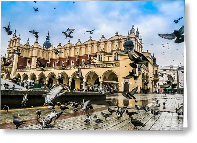 A Lot Of Doves In Krakow Old City Greeting Card