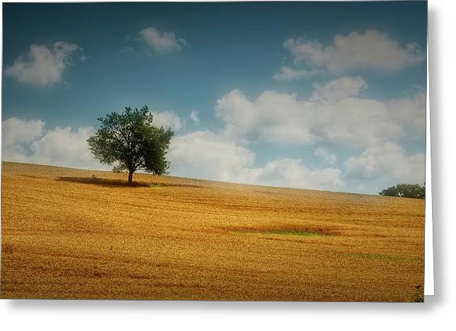 Greeting Card featuring the photograph A Machias Hillside by Guy Whiteley