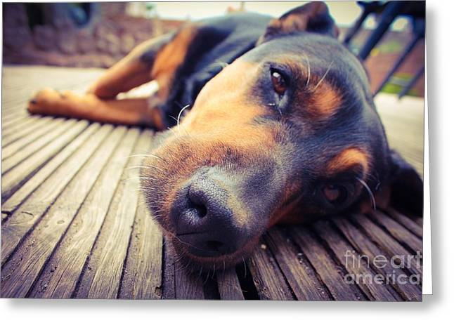 A Mixed Breed Dog Dozing On Wooden Deck Greeting Card