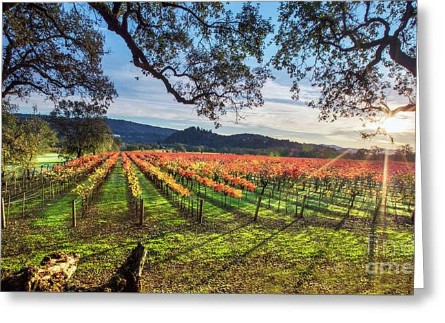 A New Day In Napa Greeting Card
