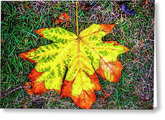 A New Leaf Greeting Card