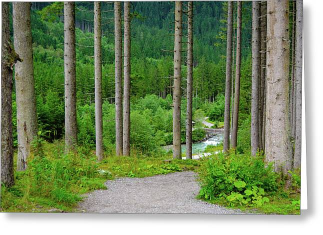 A Path To The River Greeting Card