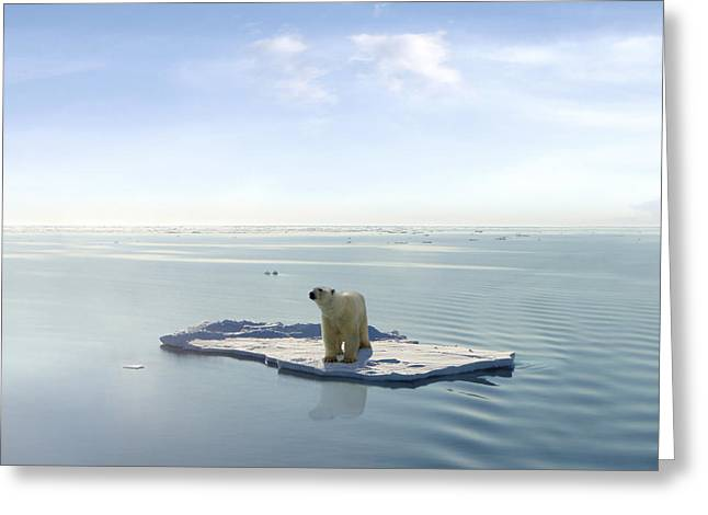 A Polar Bear Managed To Get On One Of Greeting Card