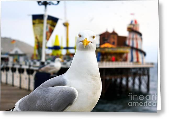 A Seagull At Brighton, Uk. Shallow Greeting Card