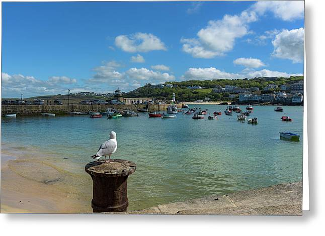 A Seagull Dreaming At The Harbour Greeting Card