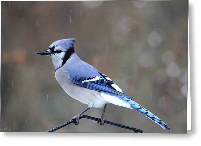 A Snowy Day With Blue Jay Greeting Card