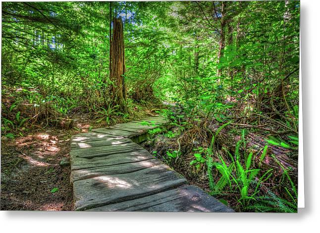 A Stroll Through The Woods Greeting Card