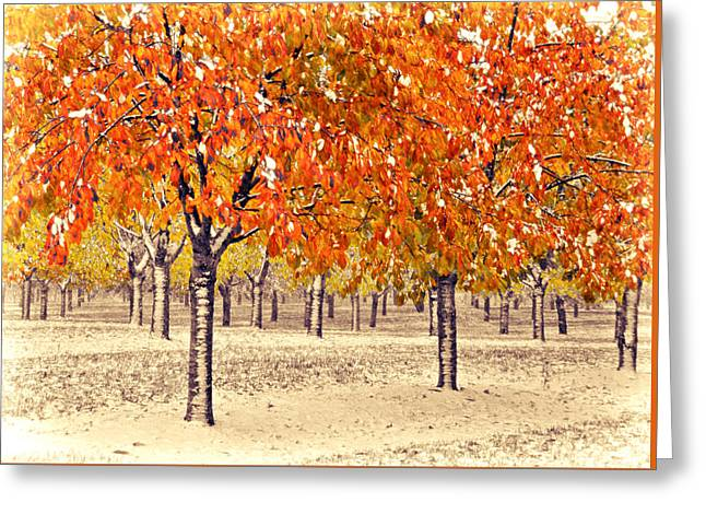 Greeting Card featuring the photograph A Touch Of Winter by SimplyCMB