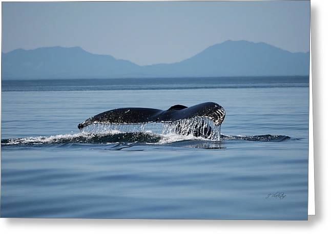 Greeting Card featuring the photograph A Whale Of A Tail - Wildlife Art by Jordan Blackstone