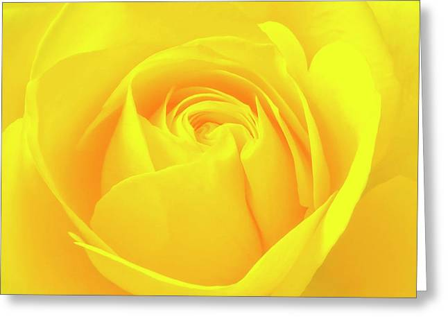 A Yellow Rose For Joy And Happiness Greeting Card