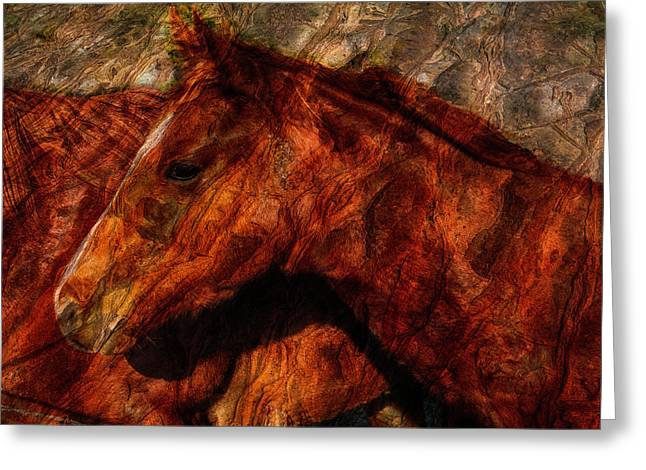 Abstract Horse Photograph Greeting Card by Fernando Margolles