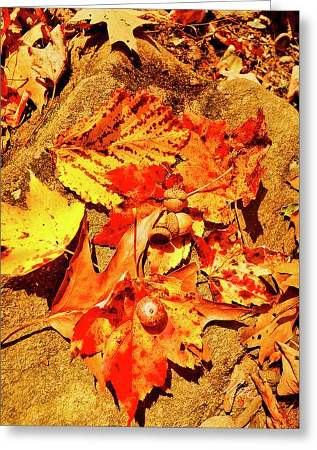 Acorns Fall Maple Oak Leaves Greeting Card