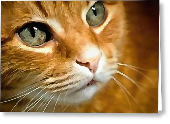 Adorable Ginger Tabby Cat Posing Greeting Card