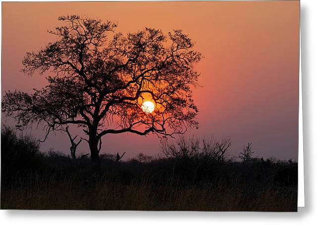 Greeting Card featuring the photograph Africa Sunset by John Rodrigues