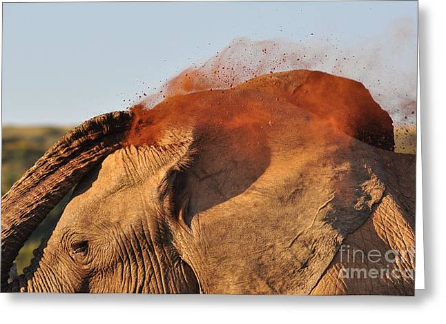 African Elephant Throwing Dust Around Greeting Card