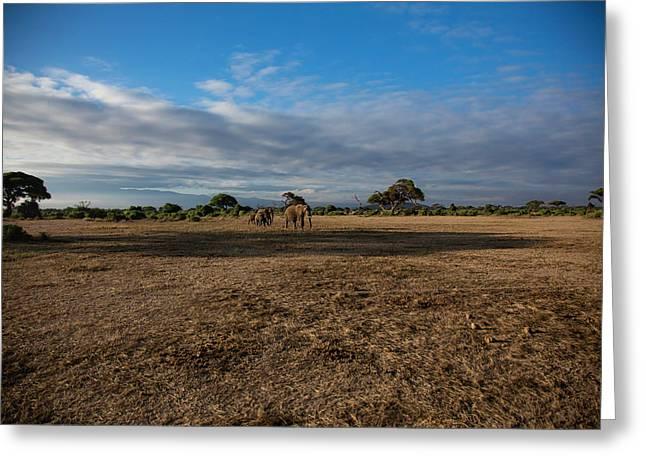 Amboseli Greeting Card