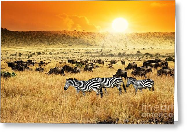 African Landscape. Zebras Herd And Greeting Card
