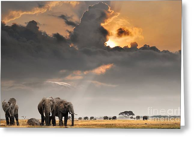 African Sunset With Elephants Greeting Card