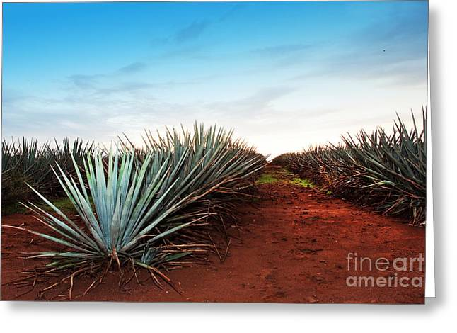 Agave Tequila Landscape To Guadalajara Greeting Card