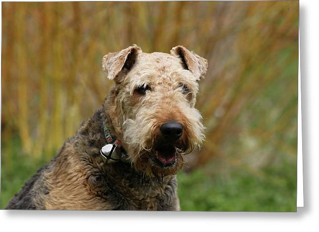 Details about  /AIREDALE TERRIER Greeting Card Robert J May Notecard Frameable Made in UK