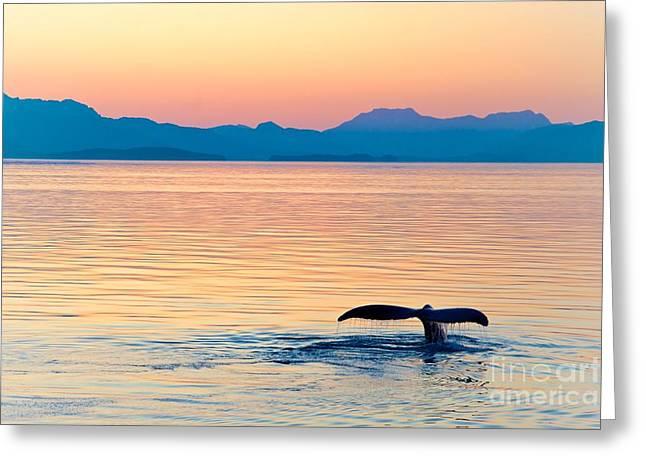 Alaska Whale Tail Sunset Greeting Card
