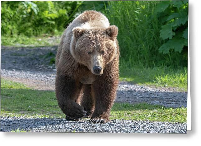 Alaskan Brown Bear Walking Towards You Greeting Card