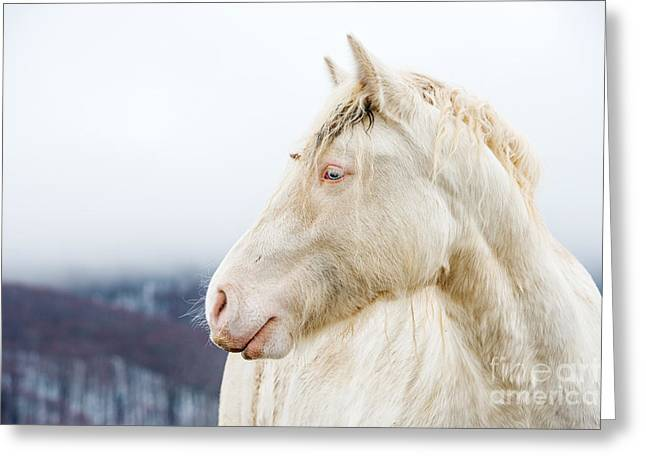 Albino Horse With Eyes Blue On The Snow Greeting Card
