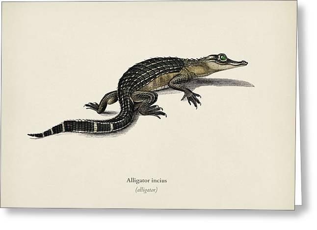 Alligator  Alligator Incius  Illustrated By Charles Dessalines D' Orbigny  1806-1876 . Greeting Card