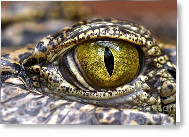 Alligator Or Crocodile Animals Eyes Greeting Card