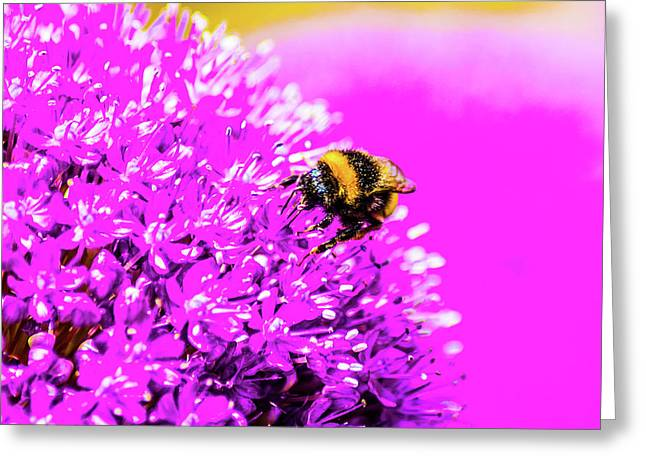 Allium With Bee 2 Greeting Card