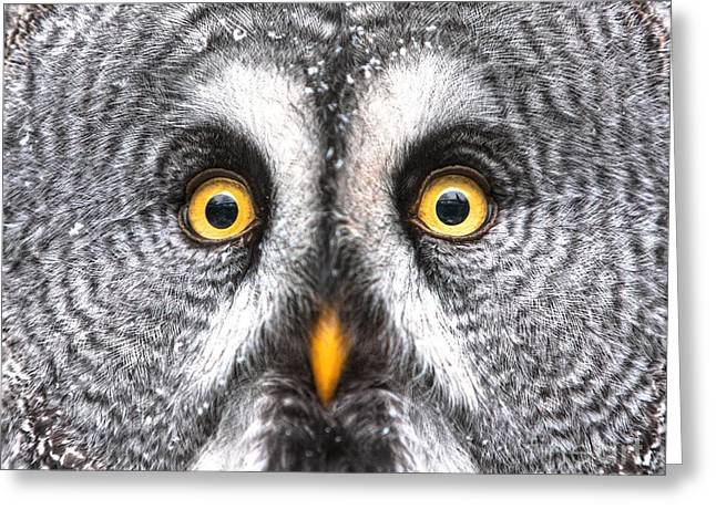 Amazed Great Grey Owl Hdr Greeting Card